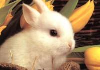 Video auguri di Pasqua
